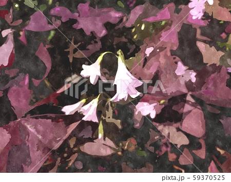 花の水彩イラストシリーズ 59370525