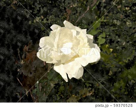 花の水彩イラストシリーズ 59370528