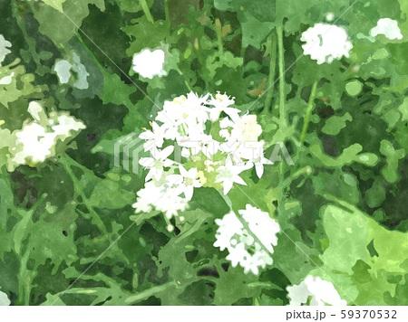 花の水彩イラストシリーズ 59370532
