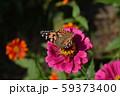 ヒメアカタテハ 59373400