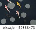 黒背景-鯉 59388473