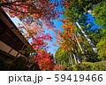 高野山 蛇腹道の紅葉 59419466