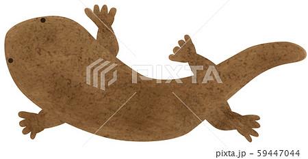 手描き  オオサンショウウオ 大山椒魚 59447044