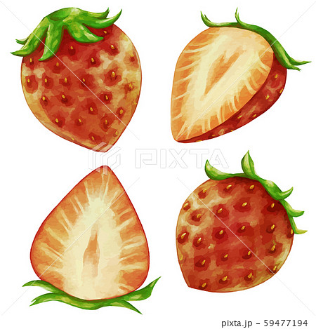 赤い苺 イチゴのイラスト 59477194