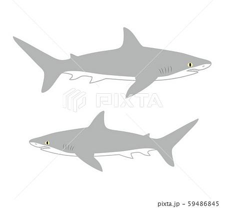 鮫 キャラクター ベクター イラスト 59486845