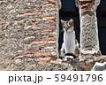 モロッコ シャウエンの野良猫 59491796