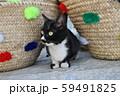 モロッコ シャウエンの野良猫 59491825