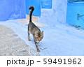 モロッコ シャウエンの野良猫 59491962