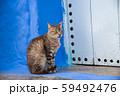 モロッコ シャウエンの野良猫 59492476