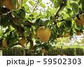 鳥取二十世紀梨記念館 なしっこ館 新雪梨 王秋梨 鳥取県倉吉市 59502303