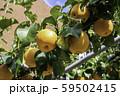 鳥取二十世紀梨記念館 なしっこ館 新興梨 鳥取県倉吉市 59502415