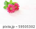 ガーベラ ペールピンクの背景 59505302