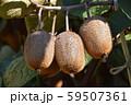 キウイフルーツ 59507361
