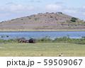 オブザベーションヒルとカバ(アンボセリ国立公園) 59509067