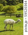 ニュージーランド オヒンガイティ フラット・ヒルズ・カフェ・アンド・ツーリスト・パーク 59520364