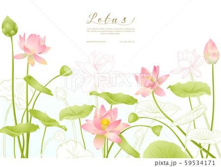 Lotus flowers. Template for wedding invitation 59534171