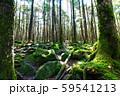 苔の広がる白駒池周辺の風景 59541213