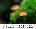 白駒池周辺の風景 苔とキノコ 59541214