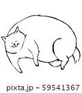 横たわっているデブ猫 59541367
