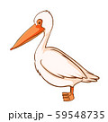 Pelican bird on white background 59548735