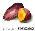 水彩で描いた焼き芋 59562602
