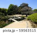 池に架かる木橋 59563515