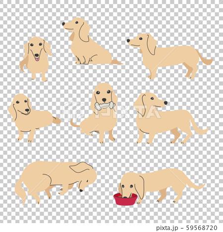 狗姿勢面部表情微型臘腸犬品種 59568720