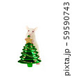 Rat with a Christmas toy isolated on a white 59590743