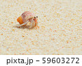 オカヤドカリ 59603272