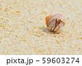 オカヤドカリ 59603274
