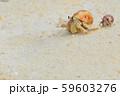 オカヤドカリ 59603276