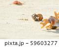 オカヤドカリ 59603277