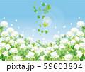 シロツメクサ:シロツメクサ 春 春の花 草原 自然 花 4月 群生 晴天 青空 満開 59603804