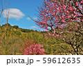 かわいらしい、春の梅の花。 59612635