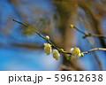 かわいらしい、春の梅の花。 59612638
