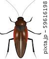 ゴキブリ 59616198