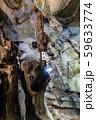 千仏鍾乳洞 59633774