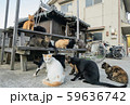岡山・真鍋島の猫たち 59636742