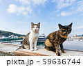 岡山・真鍋島の猫 59636744