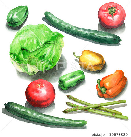 水彩で描いたサラダ野菜 59673320
