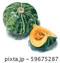 水彩で描いたかぼちゃ1個と4つ割り 59675287