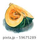 水彩で描いたかぼちゃ4つ割り 59675289