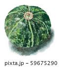 水彩で描いた丸ごとのかぼちゃ 59675290