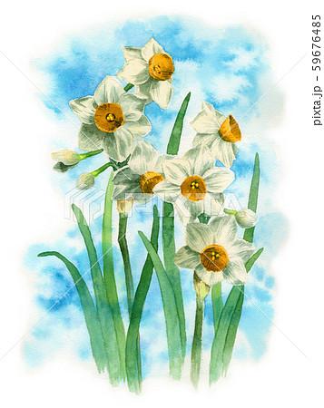 水彩で描いたニホンズイセン 59676485
