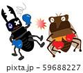 昆虫のボクシング 59688227