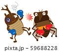 昆虫のボクシング 59688228