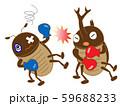昆虫のボクシング 59688233