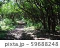 木のトンネル 59688248