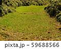 緑の歩道 59688566