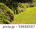 緑の歩道 59688567